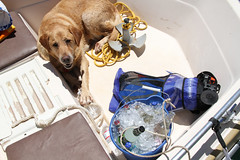 lake_oroville_june13 (20) (KrystianaBrzuza) Tags: summer vacation dog lake goldenretriever boat houseboat canine drinks alcohol boating pontoon oroville protecting onthewater lakeoroville bucketofice