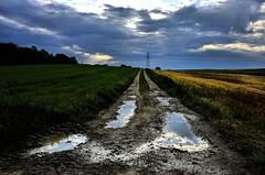 muddy waters (mamuangsuk) Tags: rural countryside wheat perspective roots meadows overcast muddywaters puddles dirttrack greenyellow vaud shatteredclouds valeyres mamuangsuk manishboy fujix100 fujixseries