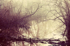 she tempted the wicked (slight clutter) Tags: trees winter cold nature fog river landscape photography branches bayou wicked slightclutter katyahorner