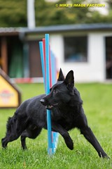 Don 2 (MIKE'S IMAGE FACTORY) Tags: dog mike canon eos michael factory image mikes full hund agility frame don 5d turnier sv array mk3 dogaction dogsport hundesport kleinbild hundeverein vdh vollformat mikesimagefactory
