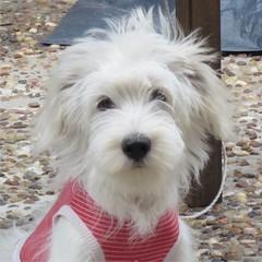 CIRO 6 MESES (OBJETOS MUUTTAA) Tags: dog naturaleza canon vida perros animales mascotas seres seresvivos
