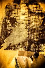 Birds for Drella (Thomas Hawk) Tags: sanfrancisco california usa museum painting unitedstates unitedstatesofamerica sfmoma soma robertrauschenberg rauschenberg sanfranciscomuseumofmodernart