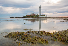 St Mary's (Callaghan69) Tags: uk sea england sky sun seascape seaweed beach water clouds sunrise reflections coast seaside nikon scenery rocks horizon north east whitleybay tyneandwear stmaryslighthouse d7100 wildaboutnorthumberland