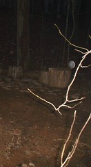 Around The House (robynlreynolds) Tags: angels ghosts orbs spiritphotography spiritguides griefhealing robynlreynolds