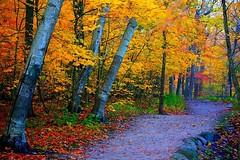 مسير زيباى جنگل در اوايل پاييز (armanazad111) Tags: پاييز البوم