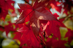 S h a d e s O f F o l i a g e (Chris Robinson Photography) Tags: blue autumn light sunset red sunlight color green fall leaves weather yellow leaf colorful bright parks foliage shade organic brightcolor eriecanal warmweather rochesternewyork leafpeeping sigma35mmf14
