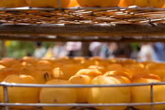 persimmon (Taipei street life) Tags: trip travel holiday fruit taiwan persimmon hsinchucity