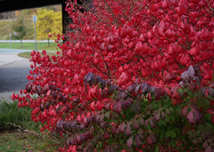 - 1 (shirley_turner) Tags: autumn delhi catskills