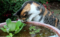 ONDERZOEK    RESEARCH (Anne-Miek Bibbe) Tags: autumn cats fall cat katten kat chat herbst herfst nederland september gato katze autunno gatto poes lautomne 2013 bibber bibbe annemiekbibbe margootje