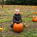pumpkin patch 2013 5.jpg