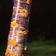 Tree and Lichen (Seriously People) Tags: newzealand 120 film mediumformat kodak slidefilm hasselblad trunk lichen analogue e100vs 503cx jonobissex