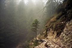the silence that's here (oh no, not again) Tags: italy mountain tree film nature fog analog forest 35mm landscape fuji olympus scan 100 mjuii trentino mezzocorona film120 epsonv350 roccapiana trentinoaltoadigesdtirol treessteps treesstepsb