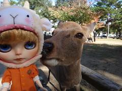 Eeeeew!!!!! Wet deer nose on my lalatroop hat!!!