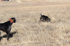 """BRW Field Day - Benelli • <a style=""""font-size:0.8em;"""" href=""""http://www.flickr.com/photos/66999112@N00/11201346885/"""" target=""""_blank"""">View on Flickr</a>"""