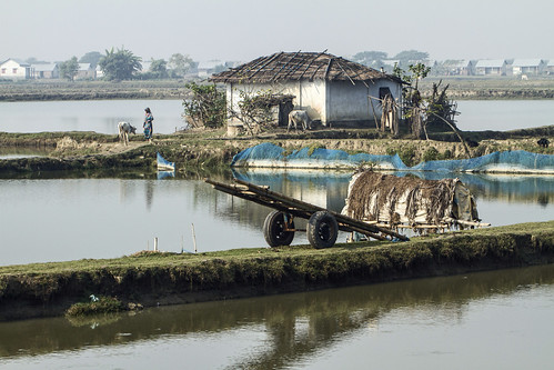 Wheels at rest by the pond in Khulna, Bangladesh. Photo by Felix Clay/Duckrabbit, 2013.
