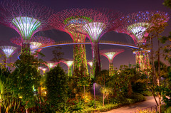garden by the bay (zulxx_) Tags: tree love nikon singapore like sick hdr flicker hdri lightroom gardenbythebay