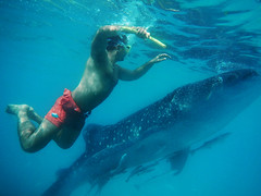 Encounter with a whale shark (irfan cheema...) Tags: ocean sea fish underwater snorkling whaleshark irfancheema