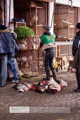 Delivery of Chickens (doublejeopardy) Tags: chicken morocco marrakech souq