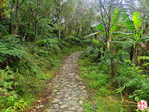 雲海山步道 (18).jpg