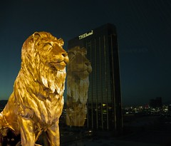 MGM Lion Lose at THEhotel