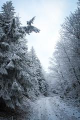 Strecno-Suchy-Magura (Ruben501) Tags: morning trees mountains nature beauty sunshine fog clouds sunrise eos martin hiking 7d slovensko slovakia cloudsea feelfree malafatra oblaky fatra kriv malyfatranskykrivan canon7d