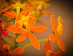 Distress (Mariasme) Tags: flowers orange nature ant aroundthehouse storybookwinner