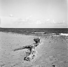 5184.Beach (Greg.photographie) Tags: blackandwhite bw 6x6 film beach analog rolleiflex mediumformat noiretblanc corse 100 35 plage schneider kreuznach xenar foma schneiderkreuznach fomapan moyenformat r09