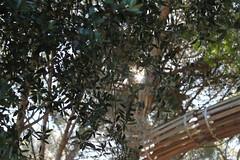 IMG_5026 (Daniel Marques Osrio) Tags: light wild sun nature colors backlight photography artistic creative lensflare flare photoidea danielmarquesosrio