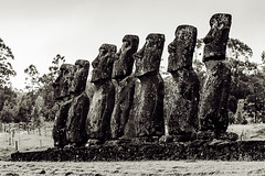 Ahu Akivi Moai Statues (Marcos Felipe T.D.) Tags: travel blackandwhite sculpture art tourism archaeology nature statue stone mystery landscape outdoors island bush ancient religion large nopeople remote spirituality past ancientcivilization easterisland vacations scenics restoring megalith traditionalculture antiquities ahu nui socialhistory traveldestinations famousplace volcaniclandscape pacificculture ahuakivi akivi moaistatue travellocation chileanethnicity
