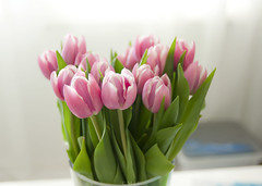 cold outside, but thanks to my darling husband it's spring inside <3 (mrs_fedorchuk) Tags: family flowers cold home canon spring tulips details decoration may husband tulip sweetheart darling springtime tullip tullips coldoutside canoneos450d