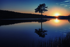 Sunset and the lonely tree (Usstan) Tags: sky lake reflection water colors norway clouds lens landscape evening norge spring nikon shadows seasons outdoor no sigma d750 serene akershus silhoutte locations reflecions 2470mm enebakk ytreenebakk