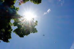 Sun, plane, bird. Seattle, WA. May 2016. (poopoorama) Tags: seattle sun tree bird airplane washington unitedstates seagull flare fujifilm xseries dannyngan x100t dannynganphotography