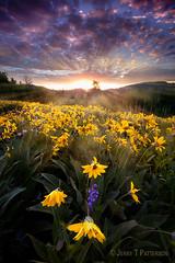Grand Teton National Park Wildflowers (Jerry T Patterson) Tags: travel sunset summer sunrise canon spring tour parks sigma workshop patterson wyoming tetons jacksonhole wy tnp tetonmountains jacksonwyoming phototour gtnp photographyworkshop