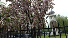 20160510_091157 (Carol B London) Tags: trees nature greenery e1 springtime stepney londone1 stepneygreen spring2016