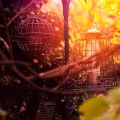 Breakfast (Armands Bels) Tags: light colour tree bird london kew gardens 50mm spring nikon soft feeding londonist nikkor50mm nikond90 50mm18g