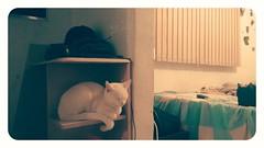 2016-05-14_06-03-07 (nepenthes) Tags: cats white black animals branco cat kitten kitty gatos preto felines