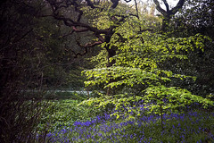 Bells (Elysian-Photography) Tags: park uk trees bluebells landscape countryside spring woods oldham countrypark daisynook greatermanchester northwestengland