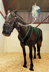 Horsey Hospital (R~P~M) Tags: uk greatbritain england horse animal hospital unitedkingdom equine veterinary pottersbar royalveterinarycollege colic