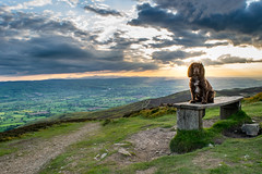 Charlie on the Hill (Richard Langton-Davies) Tags: sunset dog pet green nature wales clouds bench landscape evening nikon walks fields spaniel paths cocker manfrotto moel flintshire northwales clwydian famau denbighshire footpaths