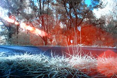 IMG_4000 (ysrl) Tags: canon ir taiwan infrared tainan eos350d ef24mmf28 ir