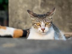 P4085744 (daisuke1230) Tags: cat olympus neko em  m43
