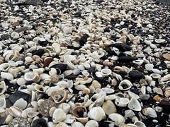 Conchas en Iztapa (ChinoEstrada) Tags: mar guatemala playa arena pacifico conchas