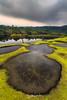 Legend of the Cryptids (Subhadip C, AFIAP) Tags: india lake green water pool animals giant landscape moss outdoor meghalaya cryptid subhadip mawlyngbna umkhakoi