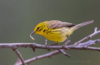 The Early Bird  7820