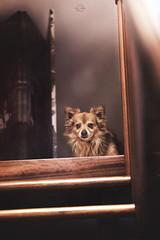 Locked in a mirror (GiuliaCibrario) Tags: dog home dogs scale stairs mirror indoor looks locked mydog fedele fidelity sguardi nascondino bloccato fedelt comeinunospecchio