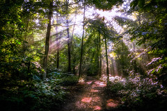 For rest (Bobby Palosaari) Tags: trees sunlight green nature sunshine forest outdoors hiking path trail serene rays heavenly enchanted