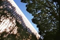Negative15 (Tony_Tsai) Tags: tree wall 35mm nikon snap f90 dx fujicolor 100