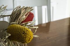 Kitchen Goals (watt.katrina110) Tags: flowers white house kitchen table chairs rustic nz historical dunedin butchers bartons hiddengem kitchengoals kjwphotographydunedin