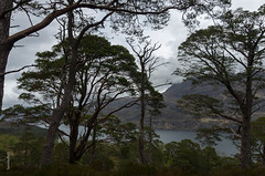 Beinn Eighe Forest Trail and Loch Maree (spookyrod) Tags: trees mountain lake mountains tree nature clouds forest scotland ross highlands reserve scottish trail loch scots maree pinewood wester beinn eighe