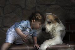 Cuntame al oido ... (Vctor.M.Chacn) Tags: perro nio fz1000 dmcfz1000 vctormchacn